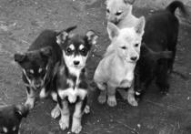 В Астрахани всего лишь один приют для животных