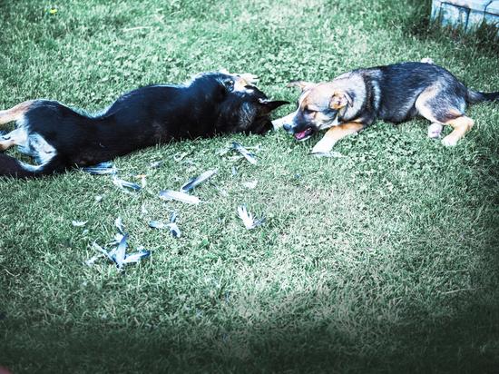 В Астрахани никак не приступят к строительству питомника для собак. Губернатор негодует