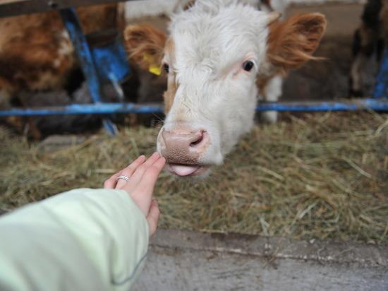 Около 1,5 тонны молока не выехали из Астрахани в Атырау